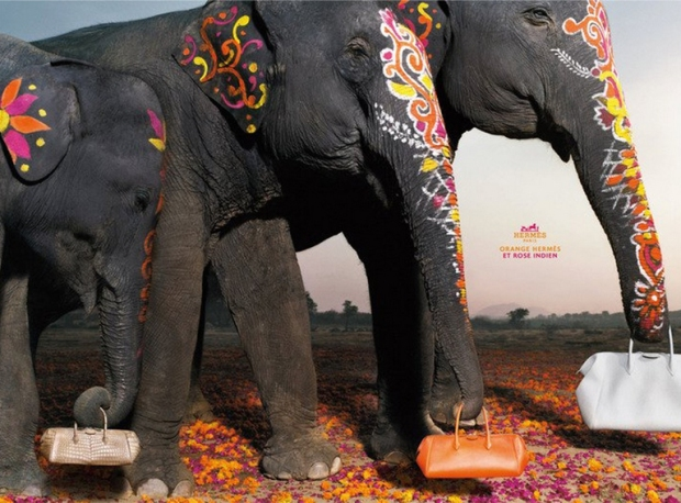 hermes-elephants